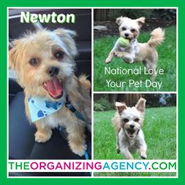 newton-300x300-5